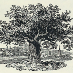 The Oak Tree by Thomas Bewick