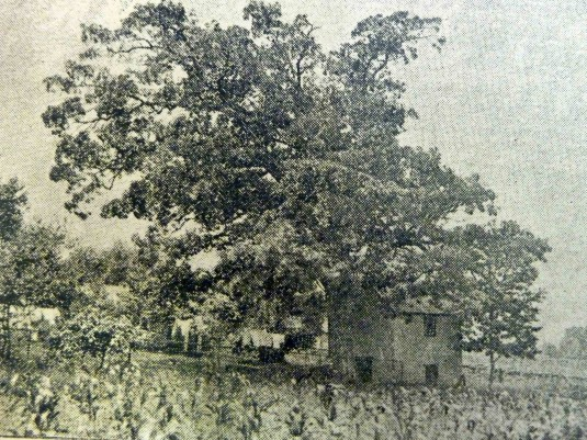 Old Oak1