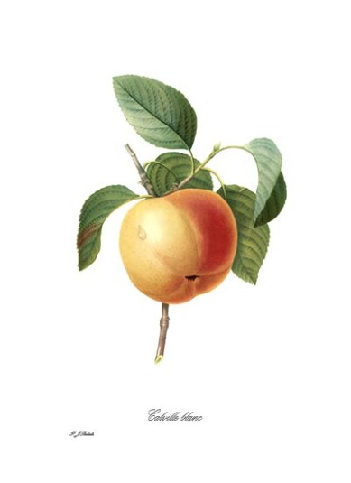 Redoute Apple