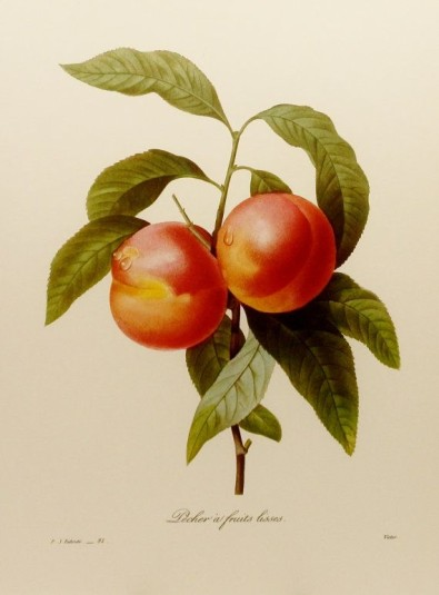 Redoute Peaches